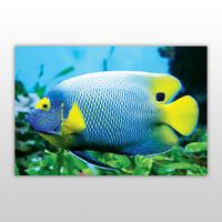 Игра пазл, серия «Яркие рыбки», арт. PZ-0608