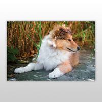 Пазл для детей, серия «Собаки и щенки», арт. PZ-1402 -Бумагия-
